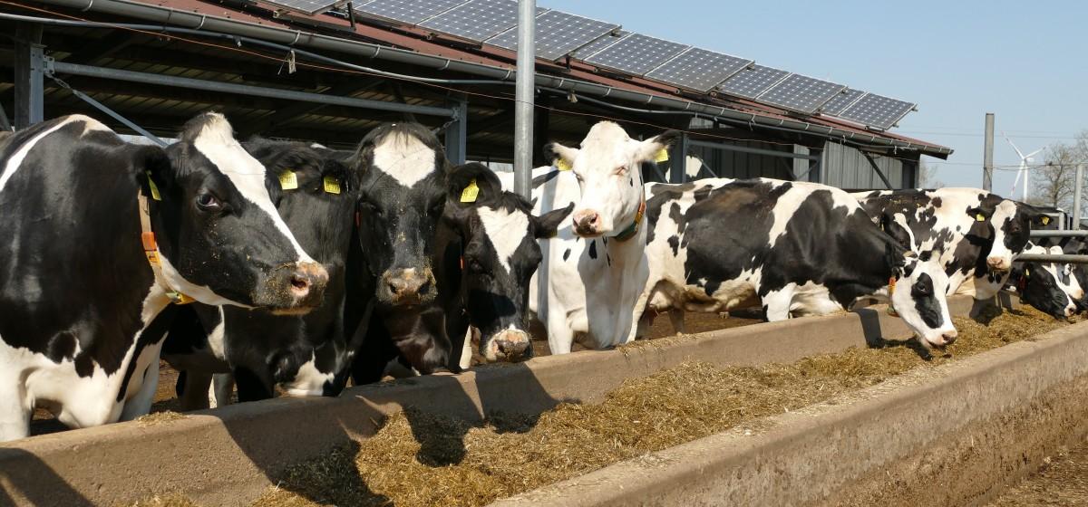 Was Kühe sonst nochlieben