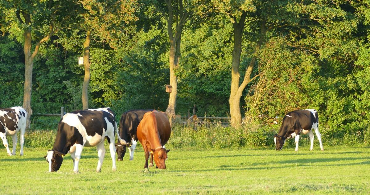 Warum unsere Kühe auf die Weide gehen(können)